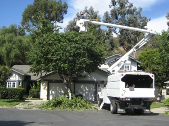 DEPENDABLE EMERGENCY TREE REMOVAL SERVICE